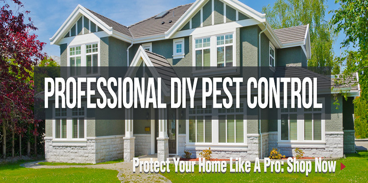 Solution-Pest-and-Lawn-Reviews