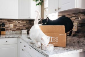 two_cats_countertop